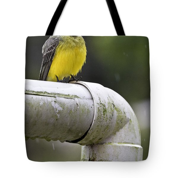 Grey-capped Flycatcher Tote Bag by Heiko Koehrer-Wagner