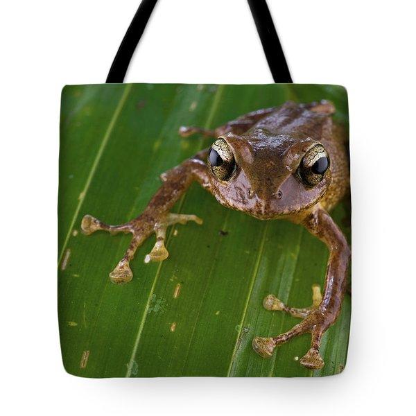 Ground Frog Nakanai Mts Papua New Guinea Tote Bag by Piotr Naskrecki
