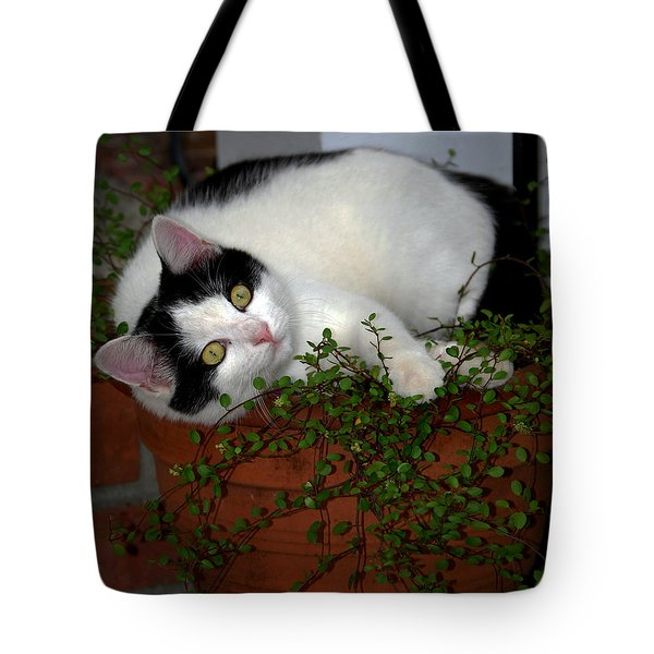 Growing A Kitten Tote Bag by Skip Willits