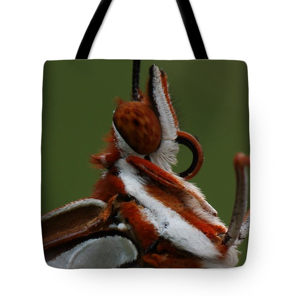 Gulf Fritillary Butterfly Portrait Tote Bag by Daniel Reed