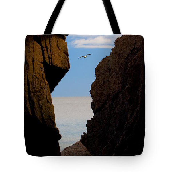 Tote Bag featuring the photograph Gulls Of Acadia by Brent L Ander
