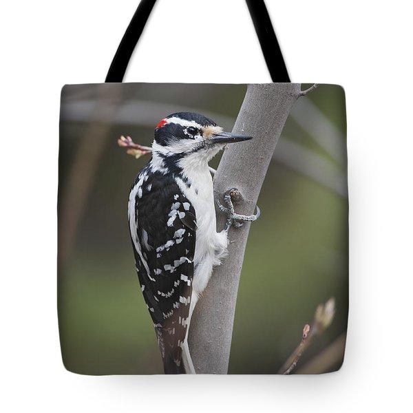 Hairy Woodpecker Picoides Villosus Tote Bag by Amy Kay