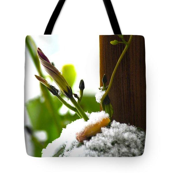 Hanging On Tote Bag by Elaine Mikkelstrup