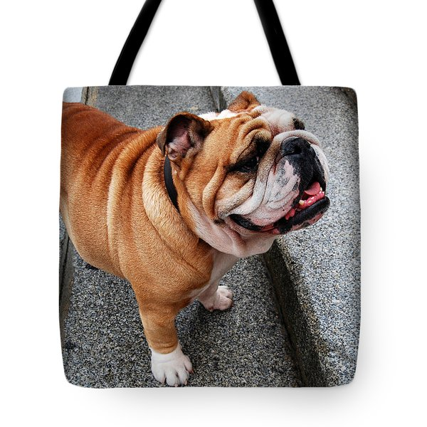 Hello My Friendly Pooch  Tote Bag by Eva Kaufman