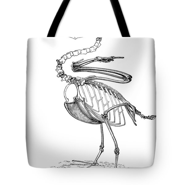 Hesperornis Tote Bag by Science Source
