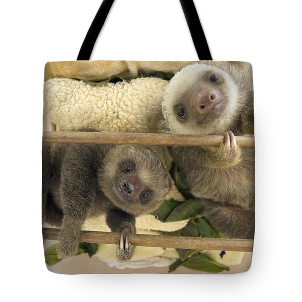 Hoffmanns Two-toed Sloth Orphaned Babies Tote Bag by Suzi Eszterhas