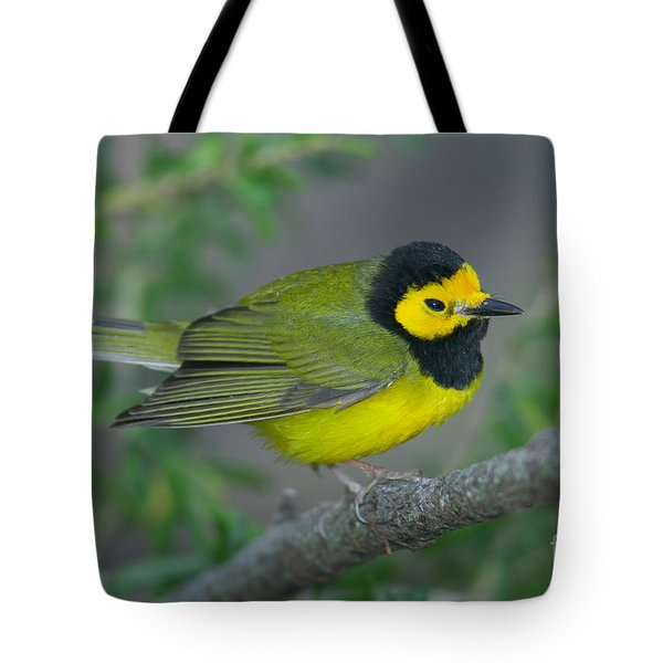 Hooded Warbler Tote Bag by Clarence Holmes
