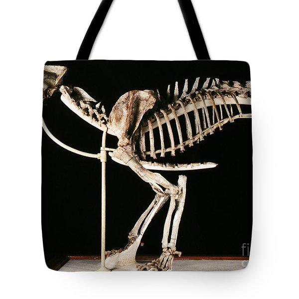 Hoplophoneus Primaevus Tote Bag by Science Source