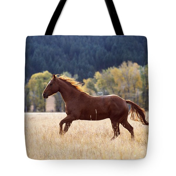 Horse Running Tote Bag by Alan and Sandy Carey and Photo Researchers