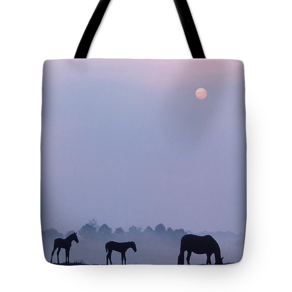 Horses In Kentucky Tote Bag by Frederica Georgia and Photo Researchers
