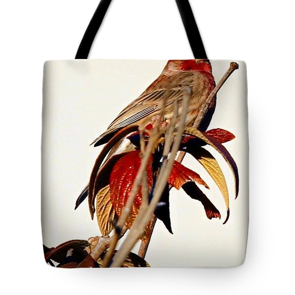 Tote Bag featuring the photograph House Finch Perch by Elizabeth Winter