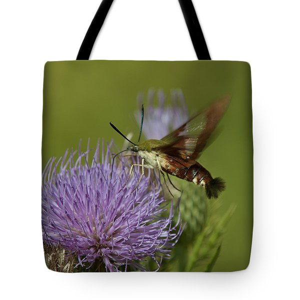 Hummingbird Or Clearwing Moth Din178 Tote Bag