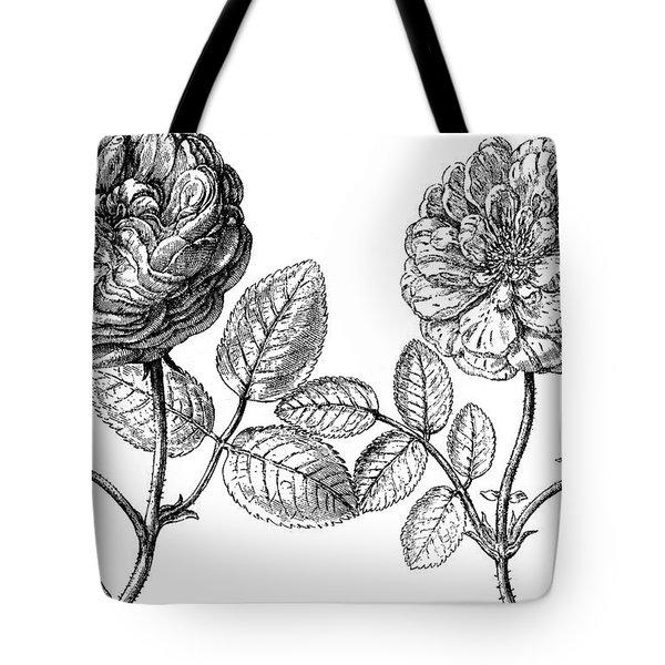 Hundred-leafed Rose Tote Bag by Granger