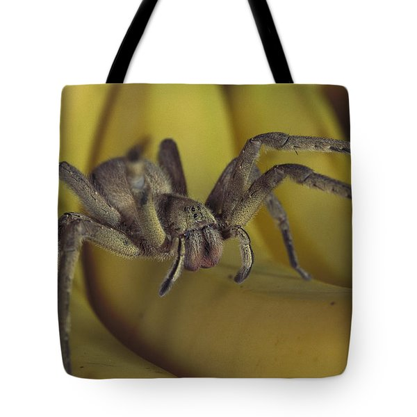 Hunting Spider Cupiennius Salei Walking Tote Bag by Heidi & Hans-Juergen Koch