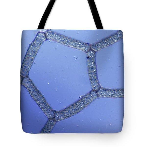Hydrodictyon Sp. Algae, Lm Tote Bag by M. I. Walker