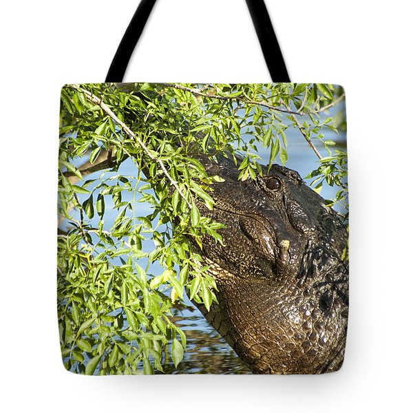 I Can See You Tote Bag by Carolyn Marshall