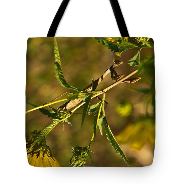 I See You And You Are Mine Tote Bag by Douglas Barnett