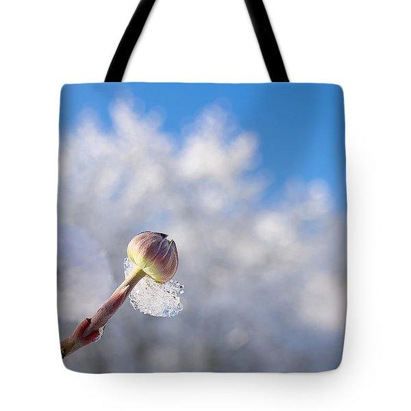 Iced Dogwood Tote Bag