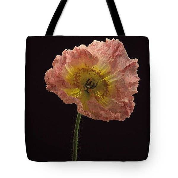 Tote Bag featuring the photograph Iceland Poppy 3 by Susan Rovira
