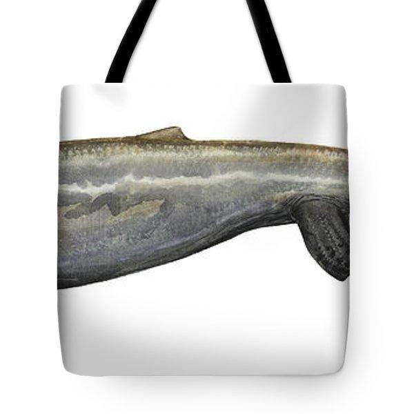 Illustration Of A Plotosaurus Tote Bag by Sergey Krasovskiy