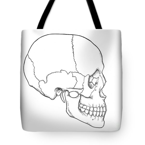 Illustration Of Human Skull Tote Bag by Science Source