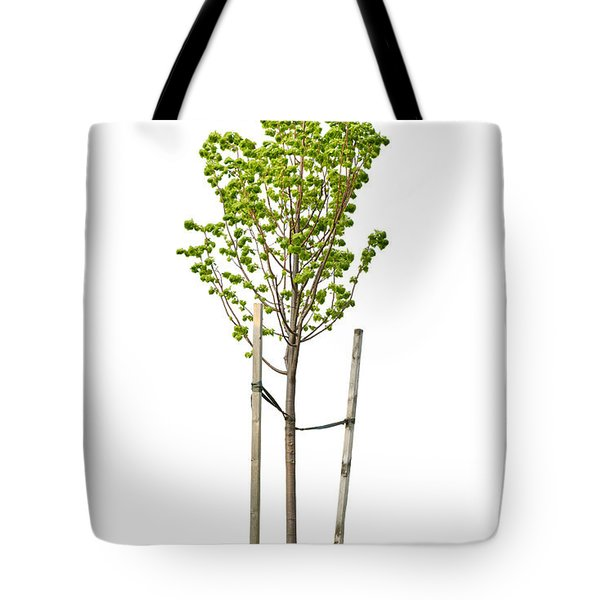 Isolated Young Linden Tree Tote Bag by Elena Elisseeva