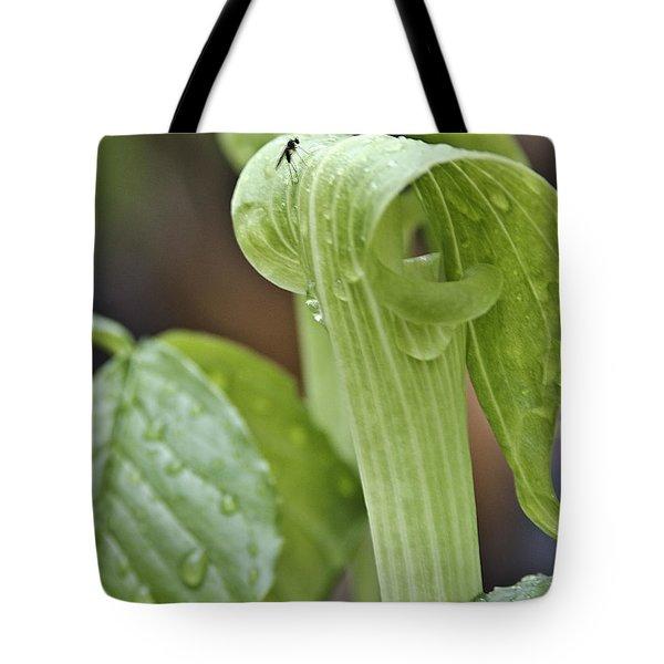 Jack Fly Tote Bag by LeeAnn McLaneGoetz McLaneGoetzStudioLLCcom