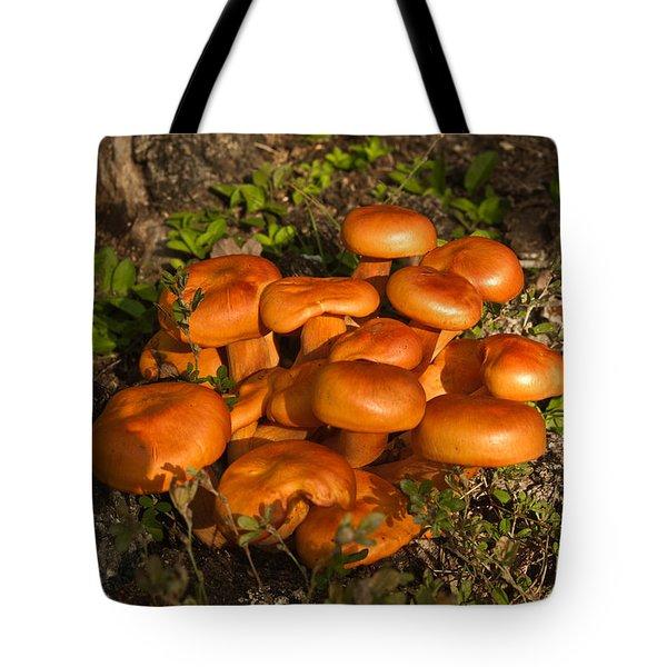 Jack Olantern Mushroom 1 Tote Bag by Douglas Barnett