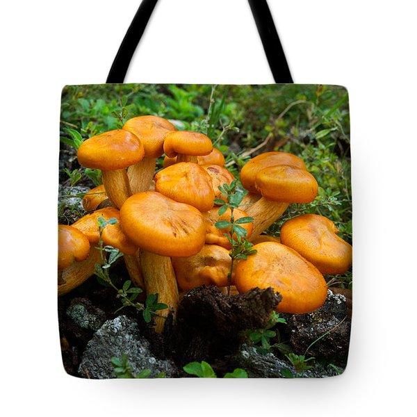 Jack Olantern Mushroom 6 Tote Bag by Douglas Barnett