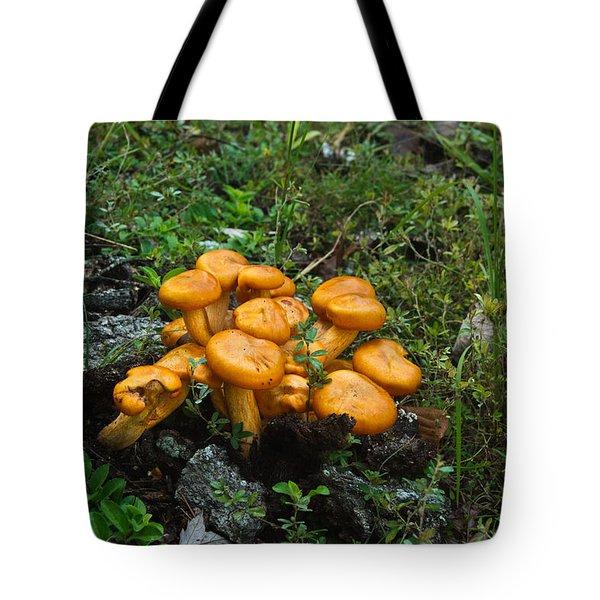 Jack Olantern Mushrooms 12 Tote Bag by Douglas Barnett