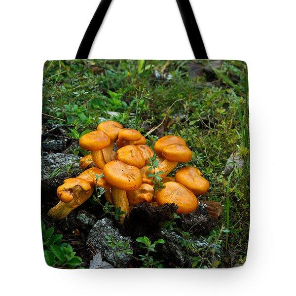 Jack Olantern Mushrooms 13 Tote Bag by Douglas Barnett