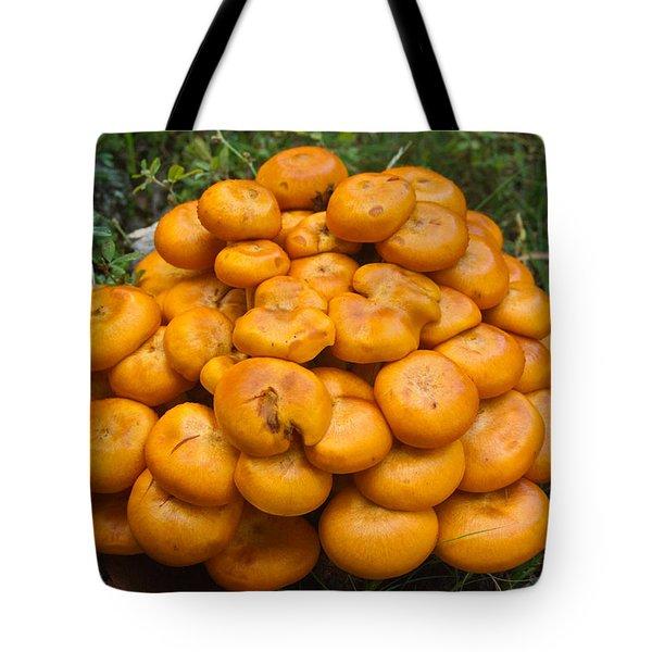 Jack Olantern Mushrooms 2 Tote Bag by Douglas Barnett