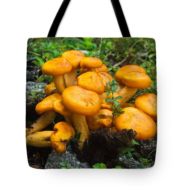 Jack Olantern Mushrooms 4 Tote Bag by Douglas Barnett