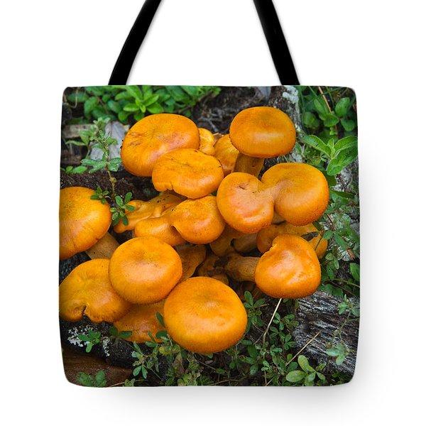 Jack Olantern Mushrooms 9 Tote Bag by Douglas Barnett