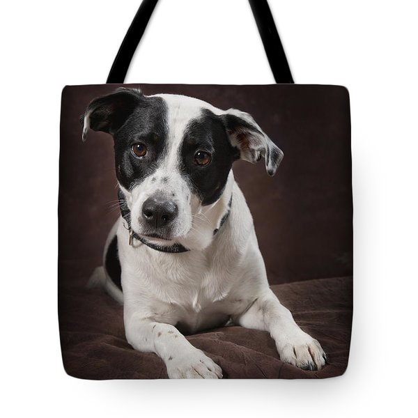 Jack Russell Terrier On A Brown Studio Tote Bag by Corey Hochachka