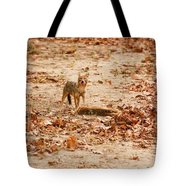 Tote Bag featuring the photograph Jackal Standing Over Deer Kill by Fotosas Photography