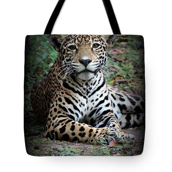Tote Bag featuring the photograph Jaguar Portrait by Kathy  White