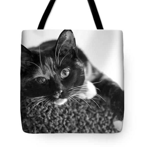 Jocko Tote Bag by Lisa Phillips