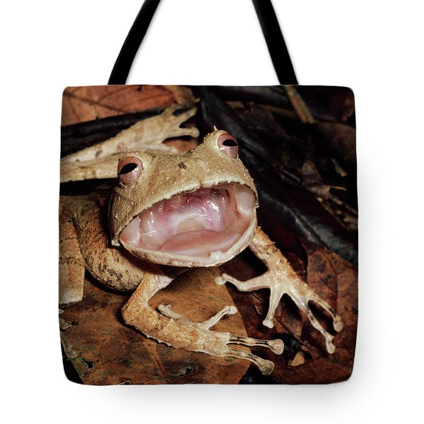Johnsons Horned Treefrog Hemiphractus Tote Bag by Michael & Patricia Fogden