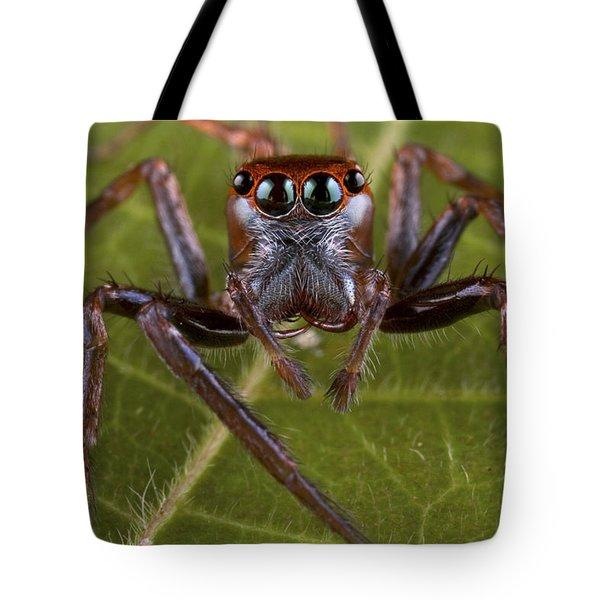Jumping Spider Papua New Guinea Tote Bag by Piotr Naskrecki