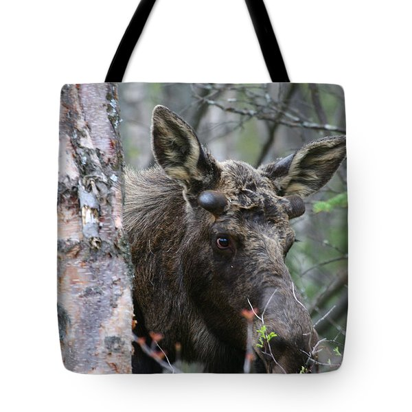 Tote Bag featuring the photograph Just A Start by Doug Lloyd