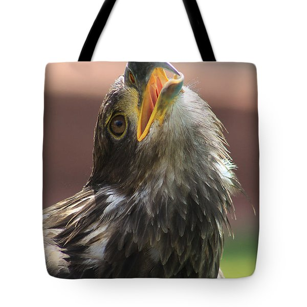 Tote Bag featuring the photograph Juvenile Bald Eagle by Alyce Taylor