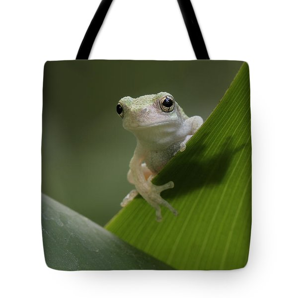 Tote Bag featuring the photograph Juvenile Grey Treefrog by Daniel Reed