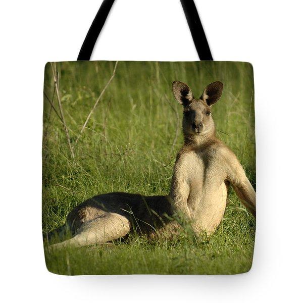Kangaroo Playing It Cool Tote Bag by Bob Christopher