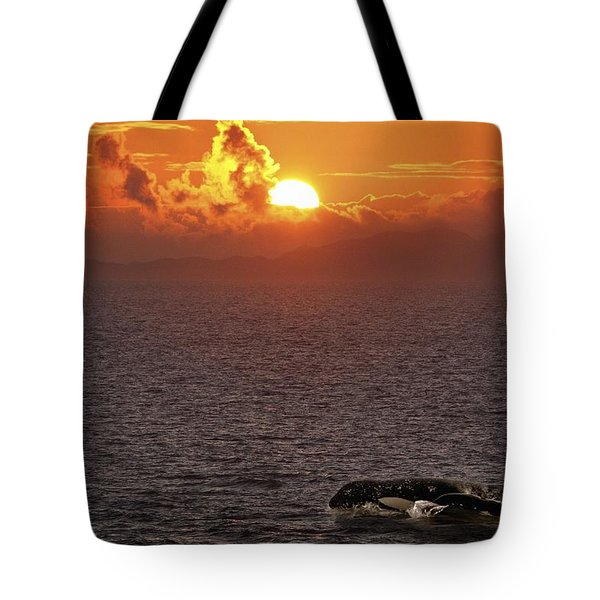 Killer Whale In The Water Tote Bag by Richard Wear