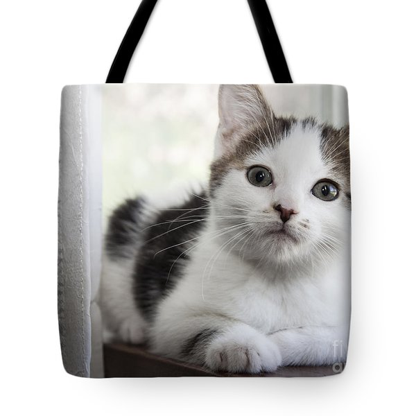 Kitten In The Window Tote Bag