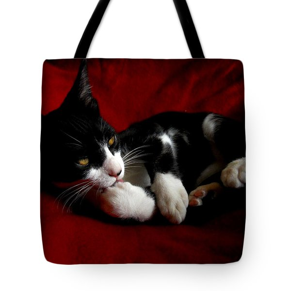 Kitten On Red Take Two Tote Bag