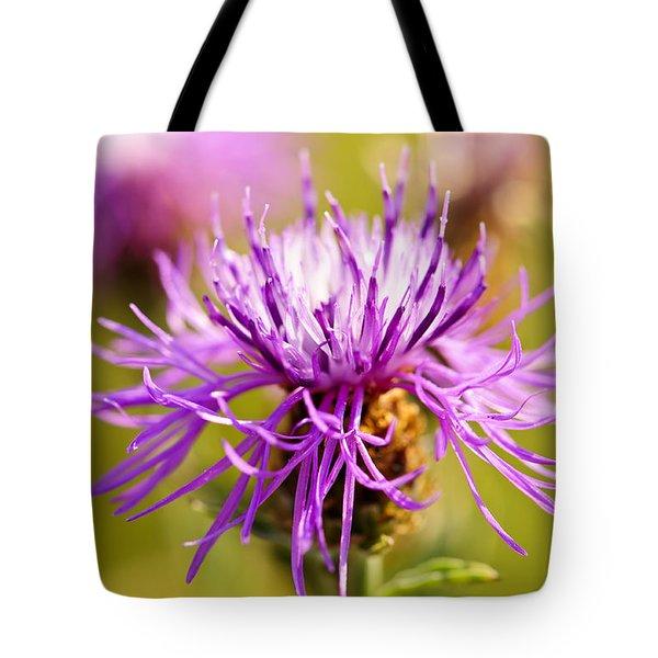 Knapweed Flower Tote Bag