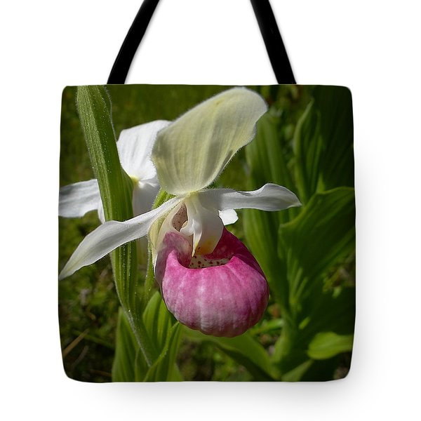 Pink Lady Slipper - Cypripedium Acaule Ait. Tote Bag by Blair Wainman