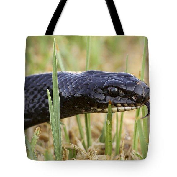 Large Whipsnake Coluber Jugularis Tote Bag by Alon Meir